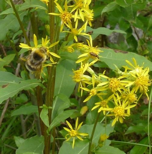 008flowerbeebug500