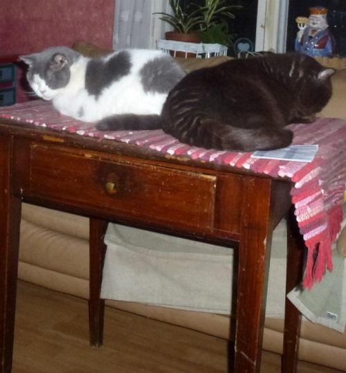 003katzentischschlafend2500
