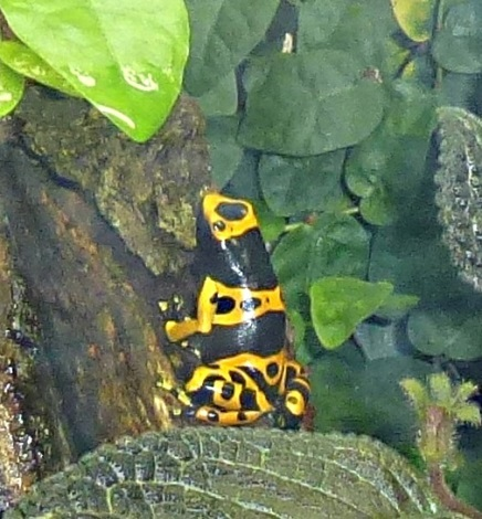 frog4436