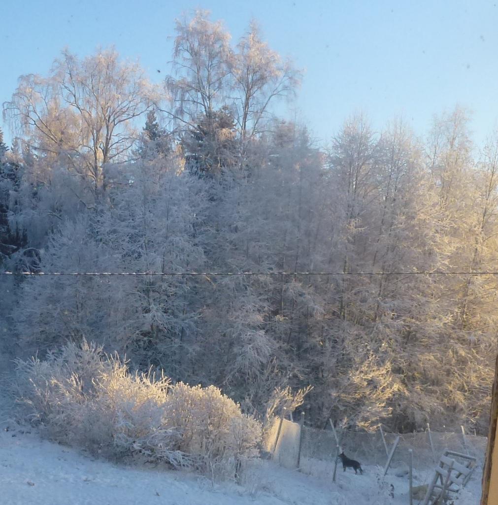 Einsamer NIKKE im winterlichen Frost