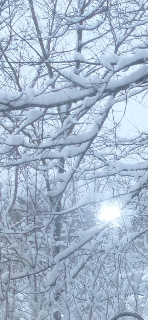 Schnee im Geäst 1