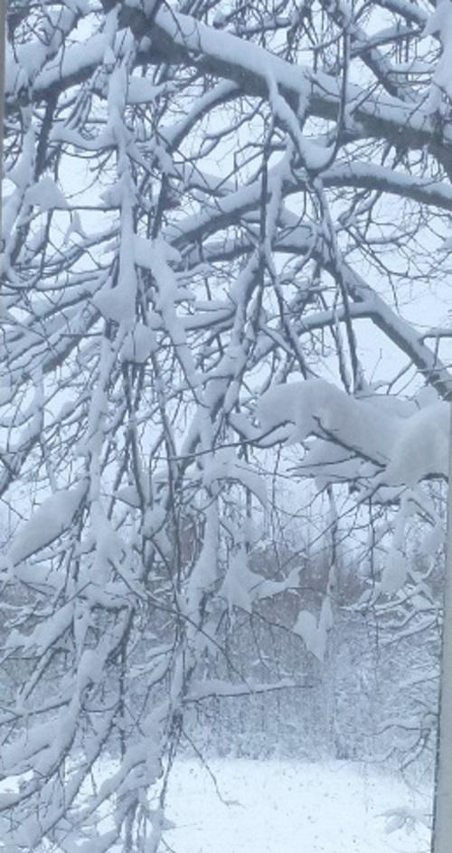 Schnee im Geäst