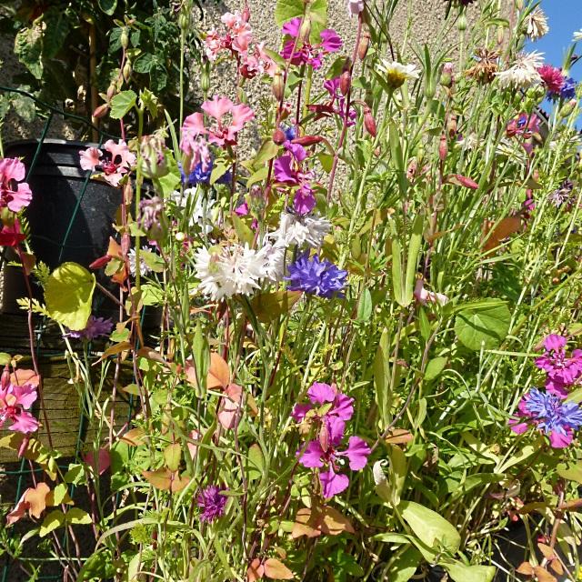 flower djungle