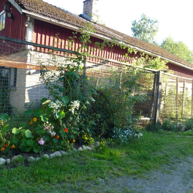 KENNEL SURROUNDED BY FLOWERS