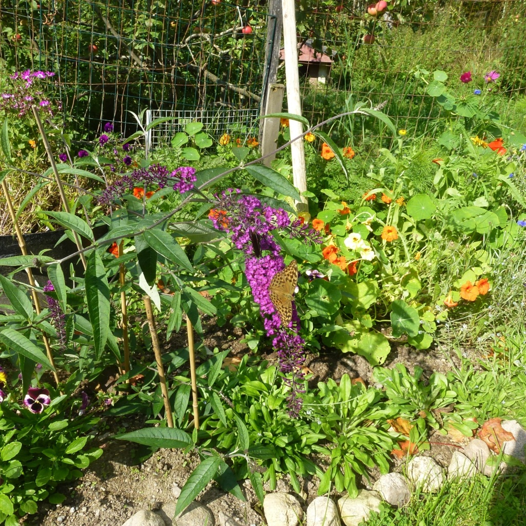 our garden2016