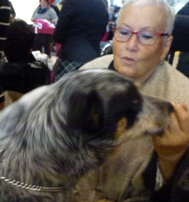 dogshow-with-cattle-dog